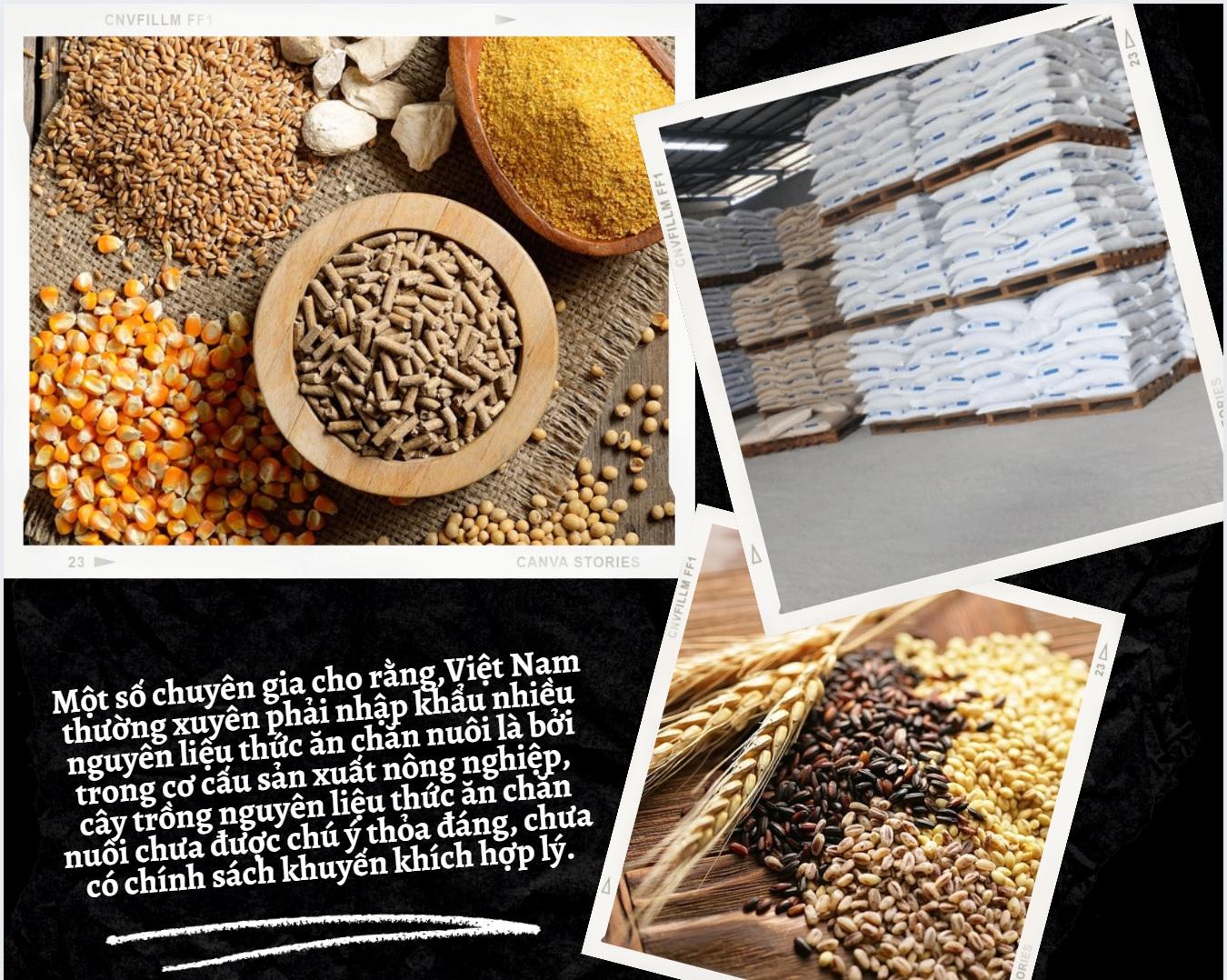 trường gạo, tấm và ngô